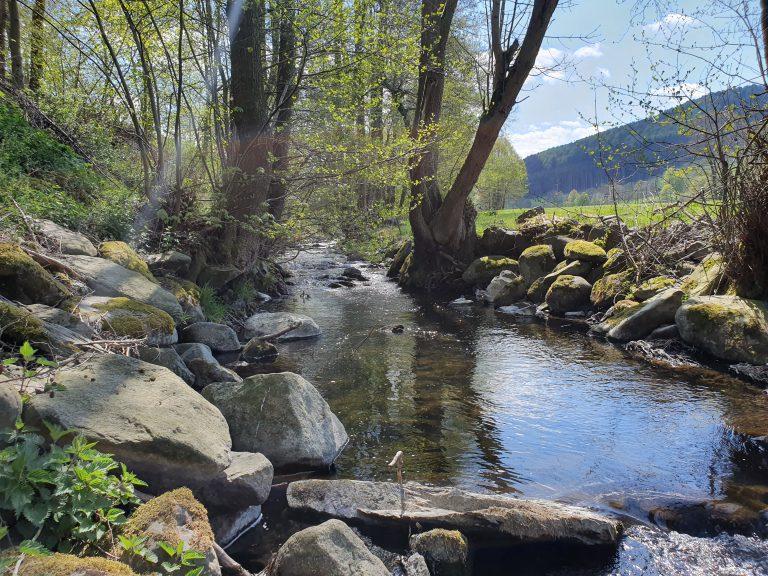 Wasser, Wald, Wiese und Berge vor der Tür